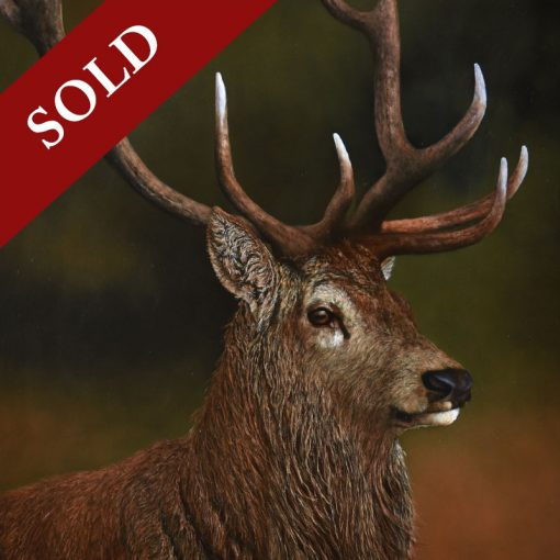 stephen-park-stag-product-sold