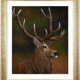 StephenPark_The_Stag_Framed