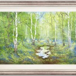 Terry-Evans-Bluebells-FRAMED
