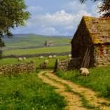 Edward-Hersey-Sheep-Grazing-CLOSEUP