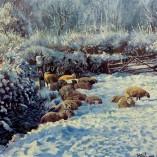 Stephen-Hawkins-Sheep-in-Snow-NOFRAME