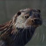 Wayne-Westwood-Otter-NOFRAME