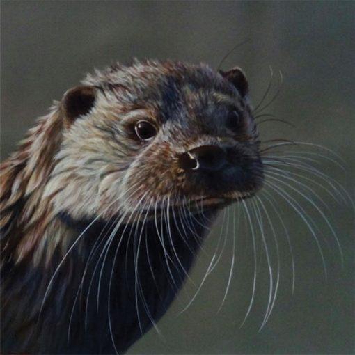 Wayne-Westwood-Otter-PRODUCT