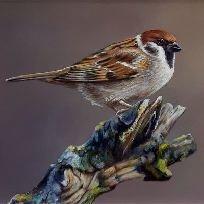 Wayne-Westwood-Bird-On-Bark-PRODUCT