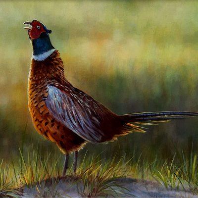 Wayne-Westwood-Sunlit-Pheasant-PRODUCT
